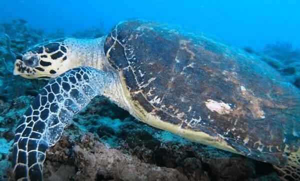 Viagens de mergulho com a Odisseia Azul
